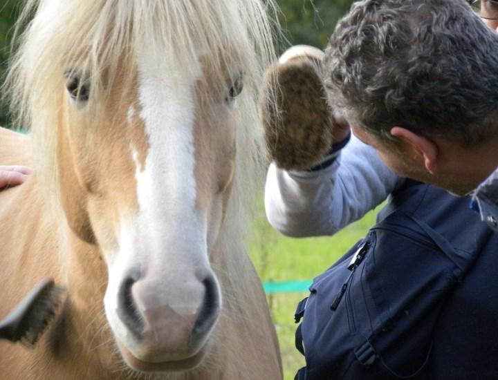 psicologia assisitita con il cavallo