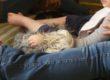 Per le scuole, la Pet-Therapy che fa bene due volte