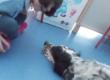 """Anche in provincia di Torino apre il """"Punto Pet-Therapy"""" Fienile Animato Onlus"""