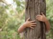 Wildness Therapy: il benessere abbracciando gli alberi.