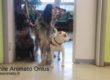 La generosità del web sostiene la Pet-Therapy in ospedale