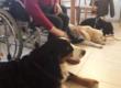 I corsi in Pet-Therapy con tirocini nelle scuole,ospedali,RSA e centri per specialità
