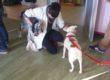 In Lombardia arrivano i controlli sulla Pet-Therapy nelle strutture sanitarie