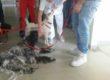 Pet-Therapy in ospedale al san Carlo Borromeo: via libera al raddoppio!