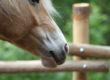 """La prima pagina """"social"""" in Equine Therapy è Fienile Animato Onlus"""