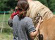 Il dono di Natale: una giornata di Equine Therapy per le ragazze adolescenti di Villaluce