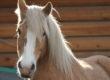"""Continua il sostegno del blog """"Tacchi a cavallo"""" per le donne operate al seno"""