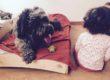 Aperte le prenotazioni per i progetti di Pet-Therapy e Pet-Education di qualità Fienile Animato Onlus