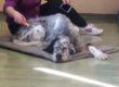 """Pet-Therapy, il """"modello Fienile Animato"""": generosità, condivisione e professionalità"""