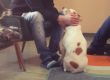 La Pet-Therapy in ospedale a Milano dal 2017