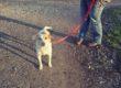 """Inizia a Milano il """"progetto autonomia"""", Pet-Therapy per adolescenti"""