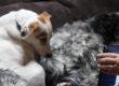 DISTANTI MA UNITI: la Pet-Therapy in ospedale a Milano