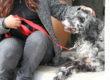 Pet-Therapy, immagini e tutela della privacy