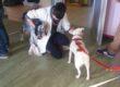 In Lombardia la Formazione in Pet-Therapy distintiva per approccio e contenuti dal 2016