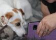 Una SUPER EQUIPE di IAA per la Pet-Therapy on line