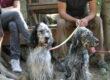 Il Posto Sicuro, dove la Pet-Therapy aiuta Persone e Animali