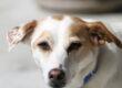 Il veterinario può prescrivere medicinali per uso umano per la cura degli animali