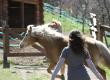Il supporto degli animali  dopo un percorso oncologico